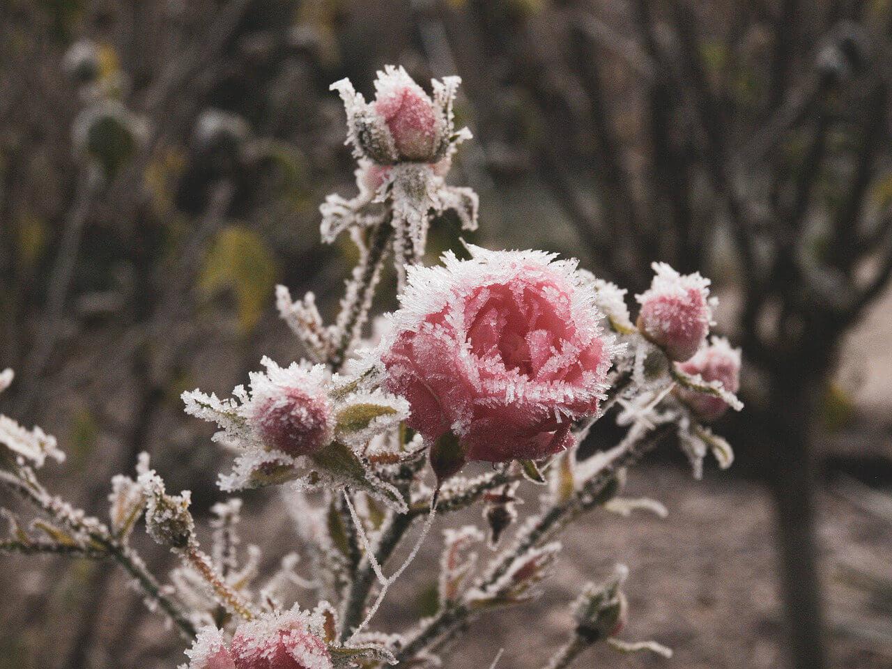 Le gel au jardin