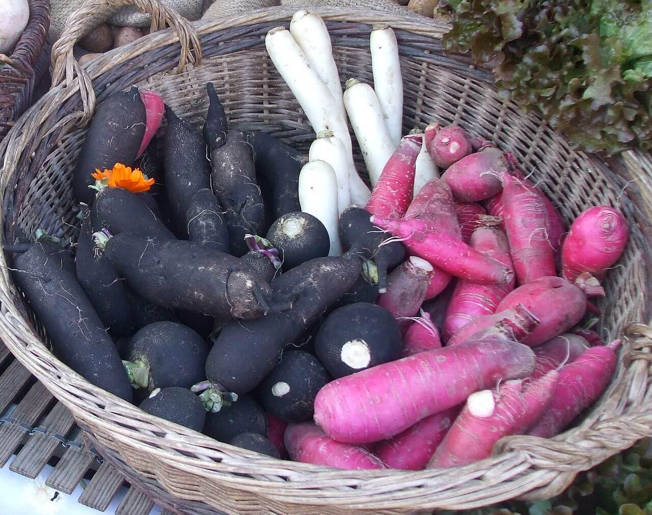 Tout savoir sur le radis noir