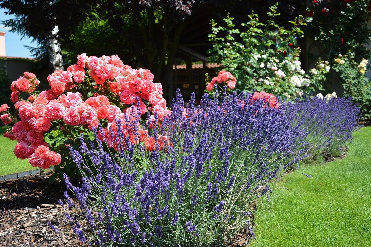 Le jardin en mars