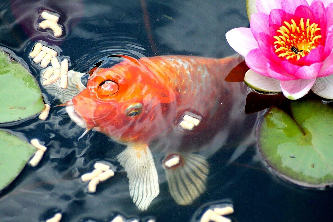 Le printemps du bassin