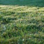 Scarifier la pelouse