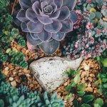 Créer un jardin sec