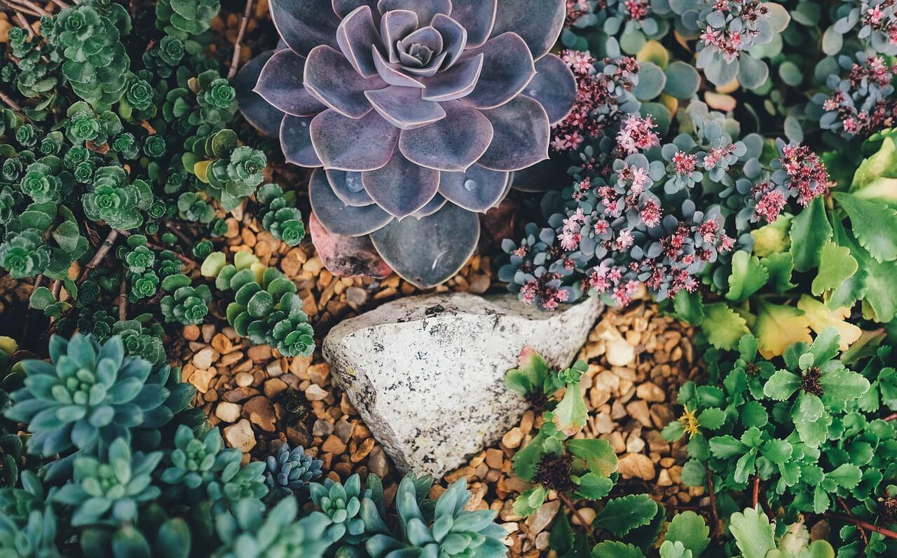 Creer Un Jardin Sec Amenagement Le Blog De Jardinet Fr