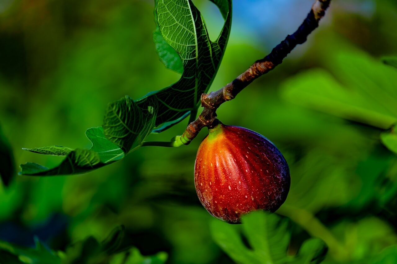 Créer un jardin gourmand