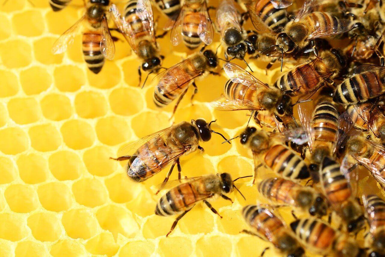 La ruche en juin
