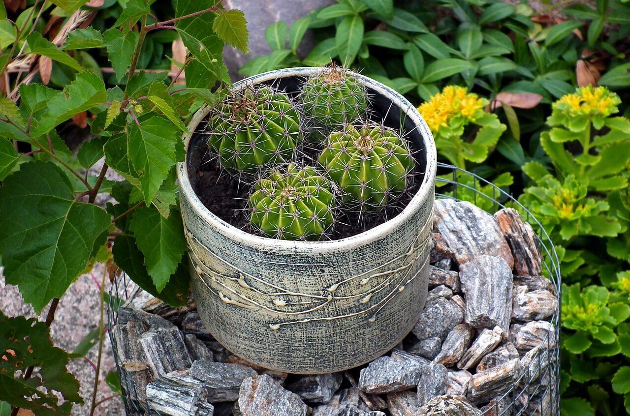 Plantes d'intérieur en été