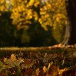 Utiliser les feuilles mortes