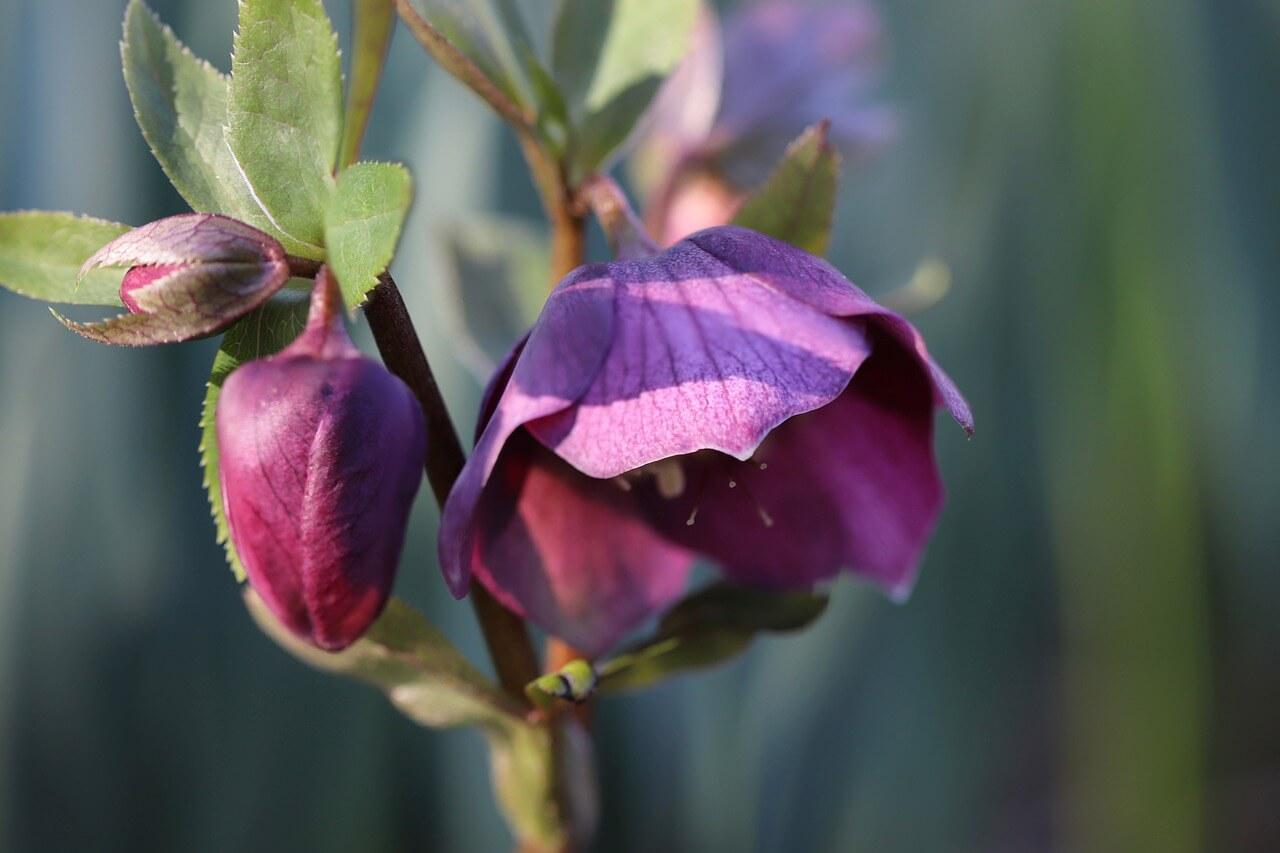 Les fleurs hivernales