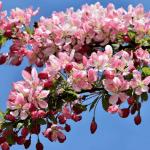 Jardin ornement en mars