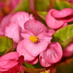 Plantes en avril