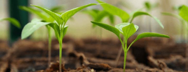 Cultiver les légumes sous-serre