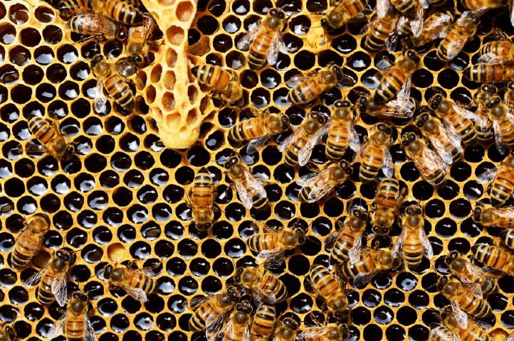 Installer une ruche
