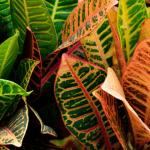Rempoter une plante d'intérieur