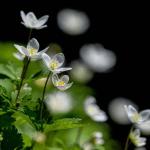 Fleurs à cueillir en juin
