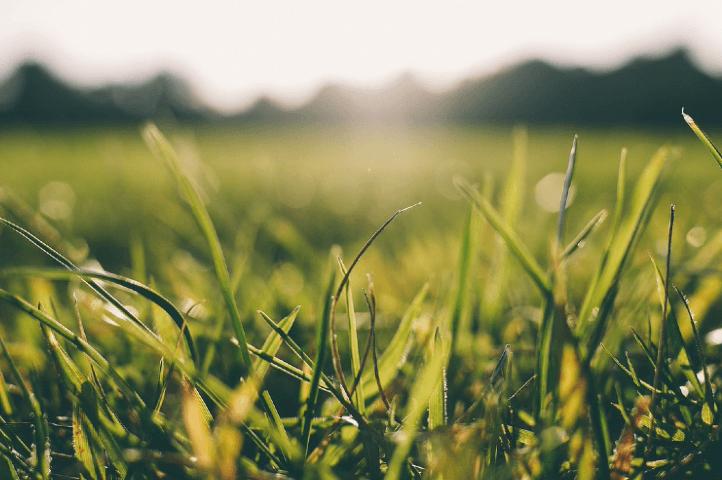 La pelouse en juin