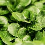 Cloche à salade