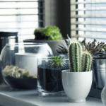 Préparer ses plantes au départ des vacances