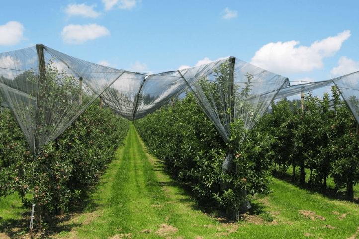 Protéger ses plantes de la grêle et de l'orage