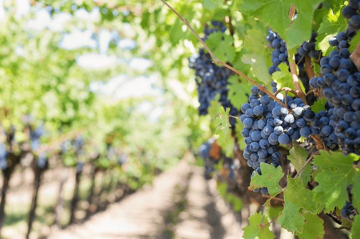 Récolter les fruits en fonction de leurs variétés
