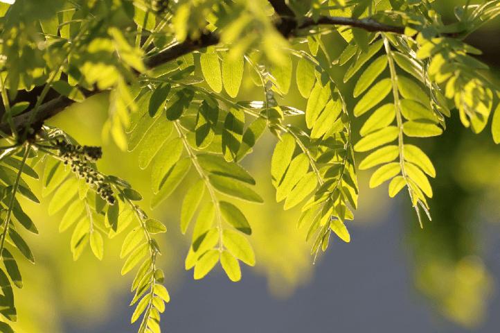 Entretenir vos arbres