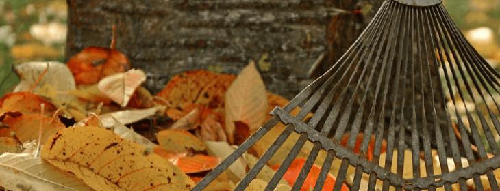 Les outils et gestes pour ramasser les feuilles
