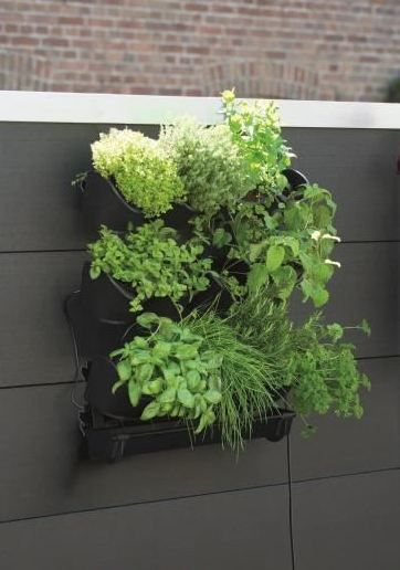 potager vertical mural en kit v g talisation de mur jardinet. Black Bedroom Furniture Sets. Home Design Ideas