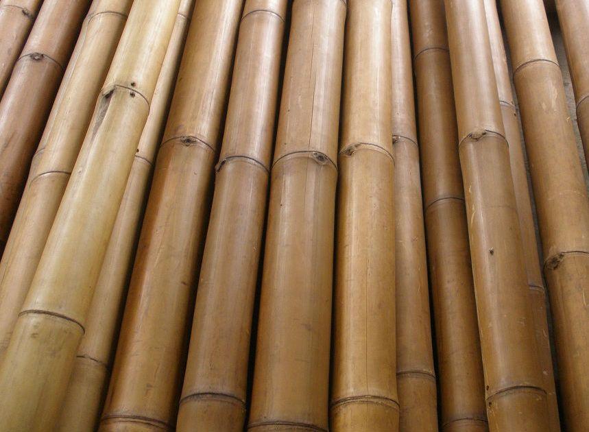 Bambou de d coration tuteur pour plante jardinet - Tronc de bambou decoratif ...