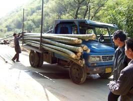 Bambou d co de chine nagoya 240cm d 60 80mm jardinet - Tuteur bambou gros diametre ...