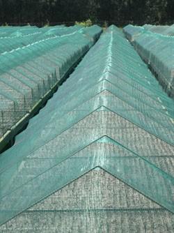 Filet anti gr le mailles 8x5mm vert 4m x m - Tunnel de protection pour potager ...