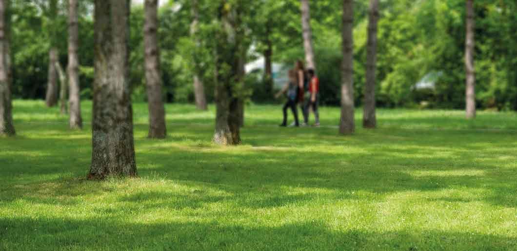 gazon pousse lente sp cial robot turflife n 2 jardinet. Black Bedroom Furniture Sets. Home Design Ideas