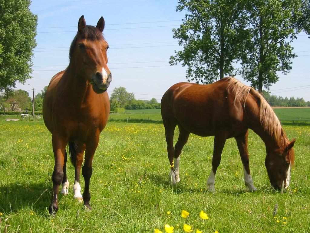 Semences pour prairie topmix chevaux n 2 jardinet for Jardinet en anglais
