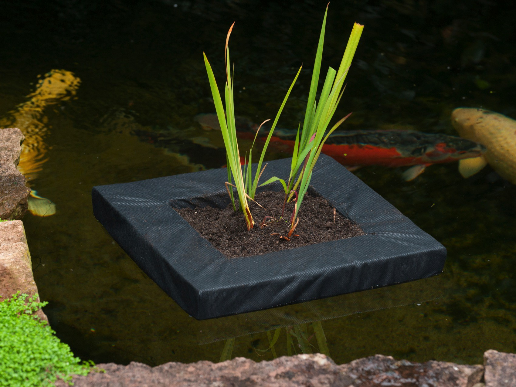 le flottante pour plante aquatique bassin tang jardinet. Black Bedroom Furniture Sets. Home Design Ideas