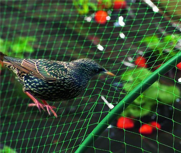filet anti oiseaux maille 25mm 12gr m vert clair jardinet. Black Bedroom Furniture Sets. Home Design Ideas